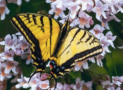image papillon.jpg (79.1kB)